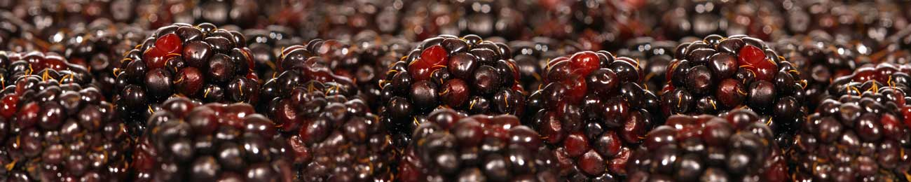 Дизайн для скинали - Forest black Berries - 100256 Image