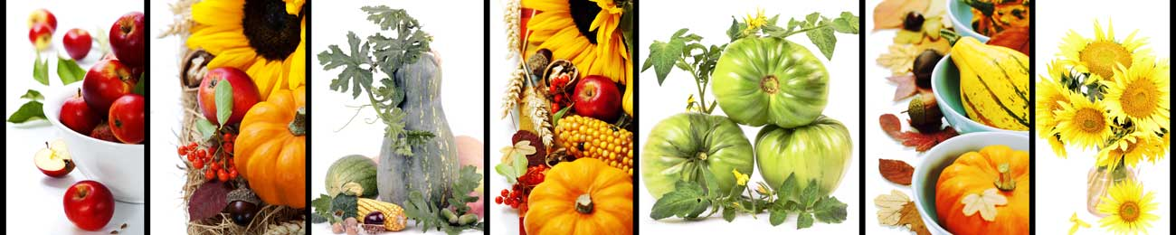 Splashbacks Glass design - Autumn fruits and vegetables - 100265 Image