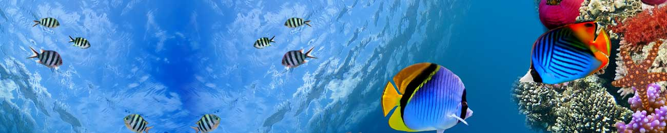 Splashbacks Glass design - Colorful fish under water - 100658 Image