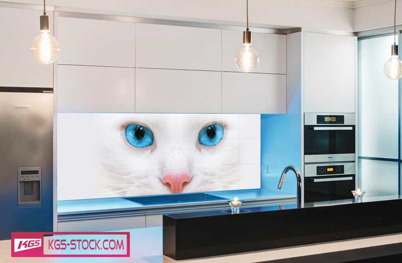 Splashbacks Glass design - White cat with blue eyes - 100661
