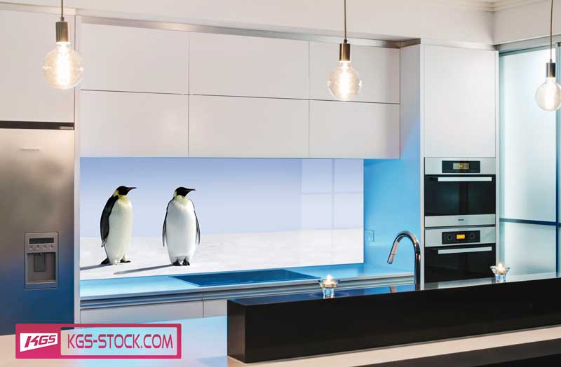 Splashbacks Glass design - Penguens in snow field - 100662