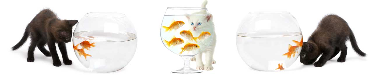 Splashbacks Glass design - Cats and fishes - 100665 Image