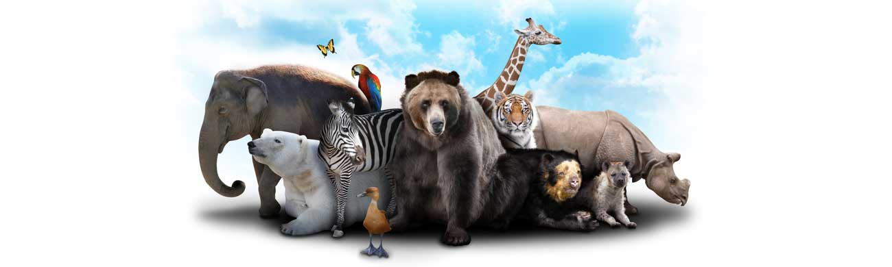 Дизайн для скинали - Wild animals together - 100667 Image