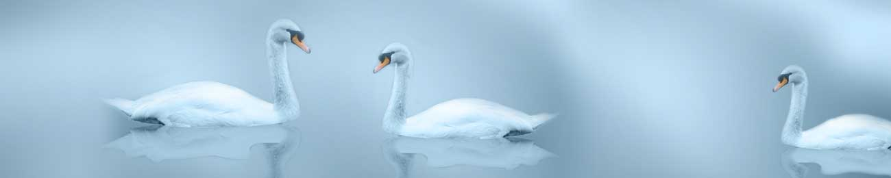 Splashbacks Glass design - Swans in the fog lake - 100668 Image