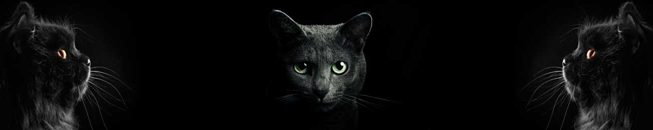 Splashbacks Glass design - Black cats in darkness - 100670 Image