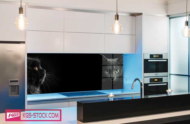 Splashbacks Glass design - Black cats in darkness - 100670