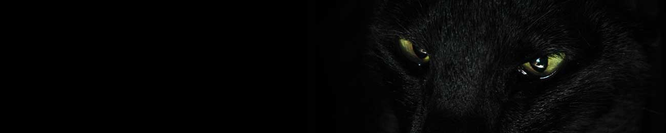 Splashbacks Glass design - Black panther eyes in darkness - 100671 Image