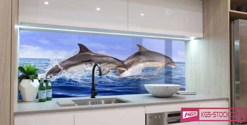 100601 Kitchen Splashbacks Glass Print Dolphins In Ocean