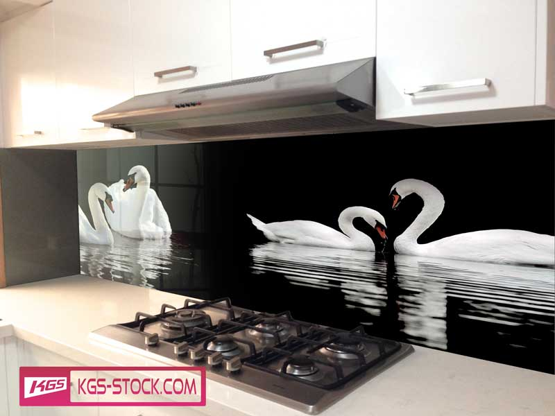 Splashbacks Glass design - White swans in dark lake - 100606