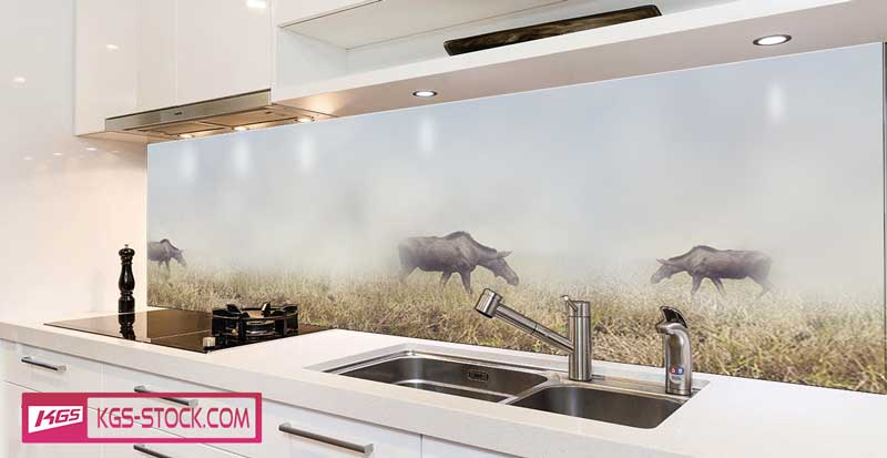 Splashbacks Glass design - Deers in the fog - 100611