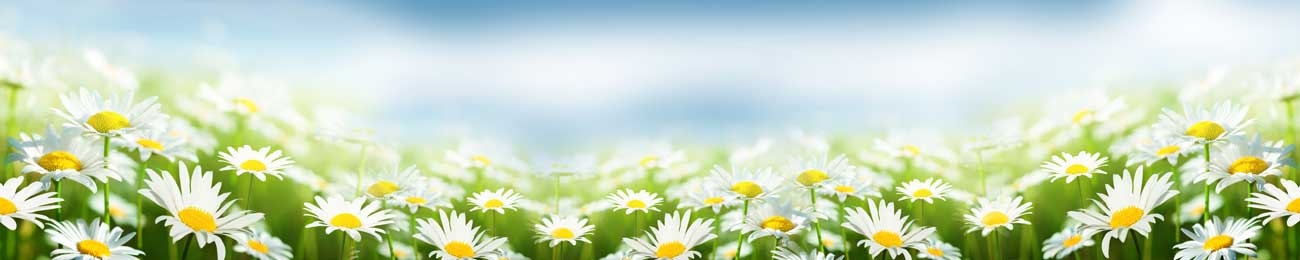 Splashbacks Glass design - Chamomile field - 100528 Image