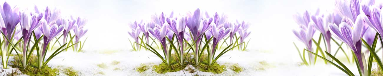 Splashbacks Glass design - Purple flowers in sand - 100529 Image