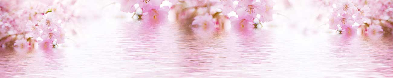 Splashbacks Glass design - Pink flowers on water - 100530 Image