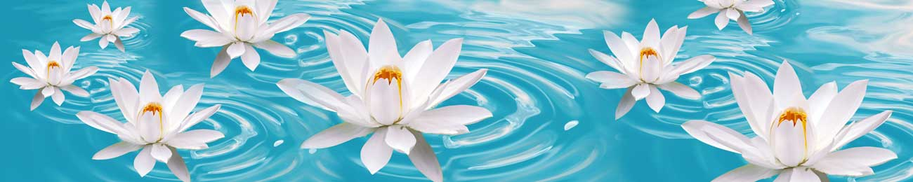 Дизайн для скинали - White Flowers on blue water - 100531 Image