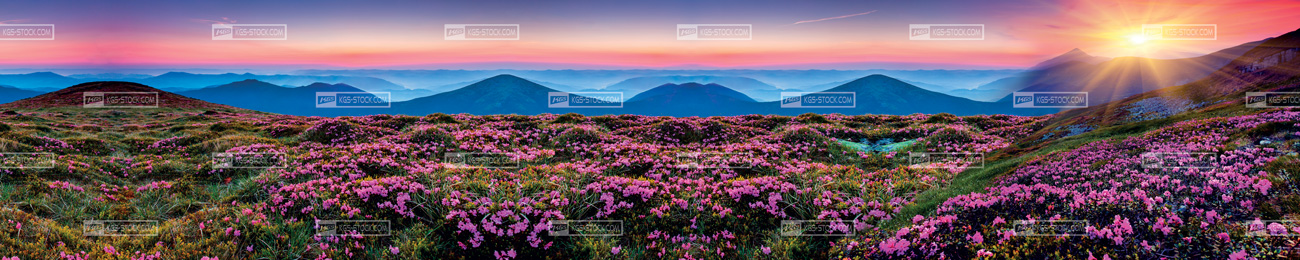 Splashbacks Glass design - Purple Flowers Field - 100501 Image