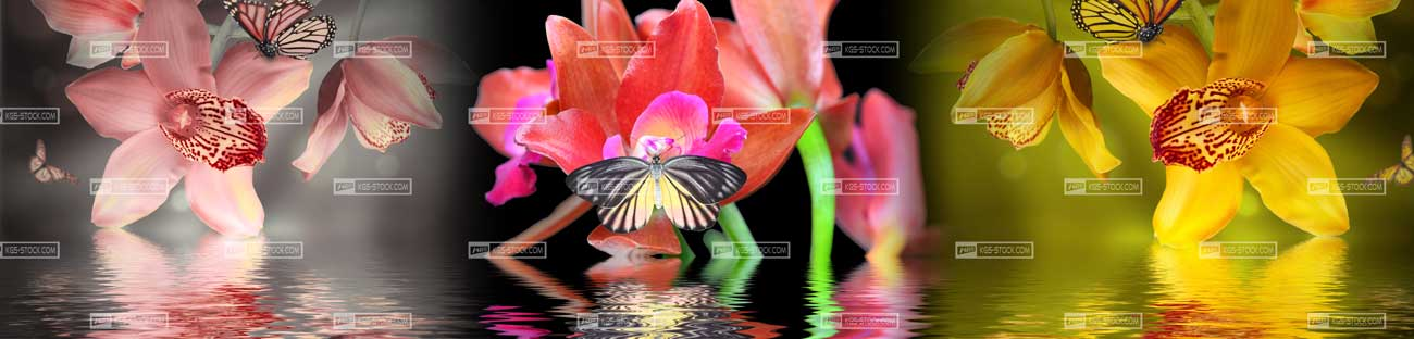 Splashbacks Glass design - Flowers in water- 100509 Image