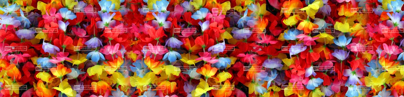 Splashbacks Glass design - Flowers Color explosion - 100510 Image