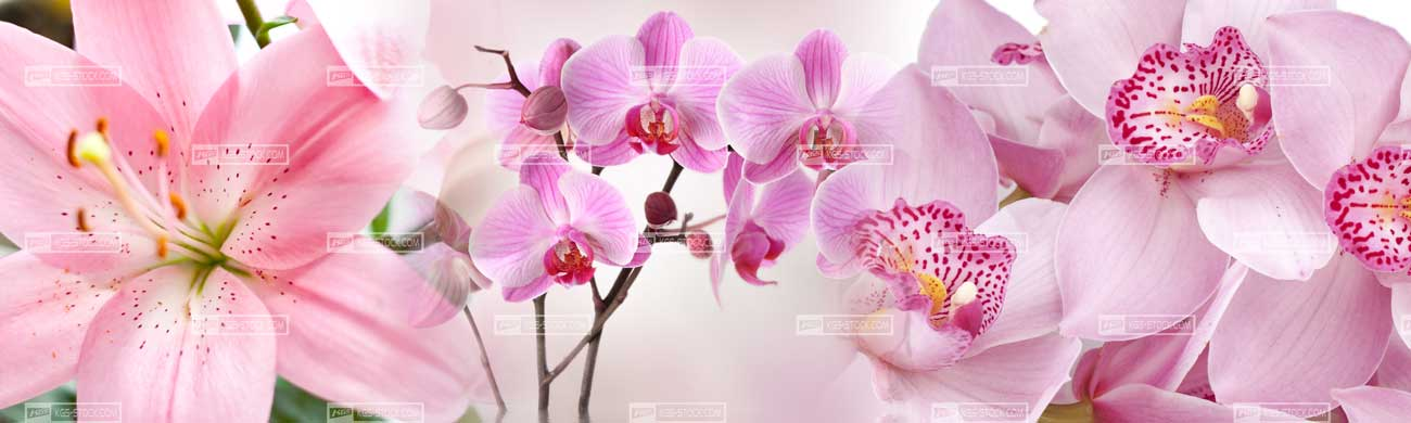 Splashbacks Glass design -  Amazing orchids - 100512 Image