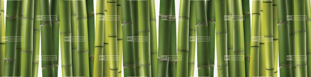 Splashbacks Glass design - Bamboo Forest - 100402
