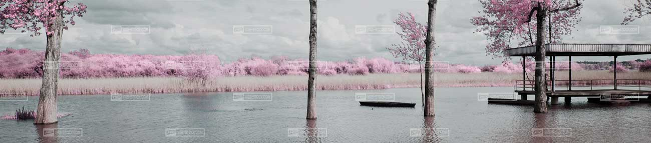 Splashbacks Glass design - Lake and Pink sakura flowers - 100409