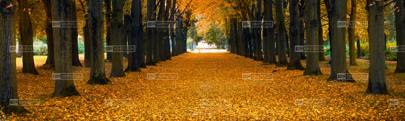 Splashbacks Glass design - Autumn trees - 100410 Image