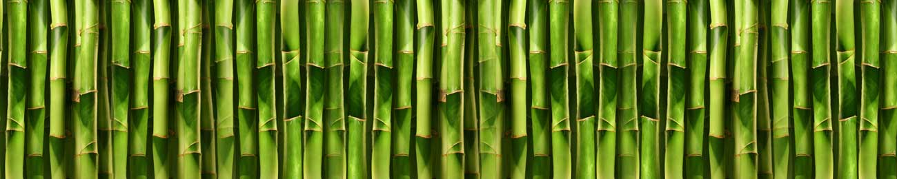 Splashbacks Glass design - Bamboo tree - 100422 Image