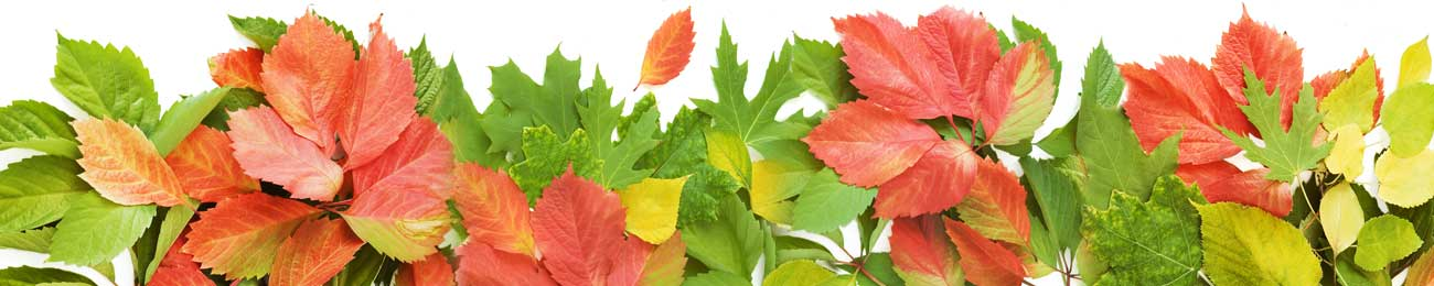 Splashbacks Glass design - Autumn leaves - 100423 Image