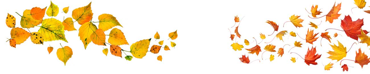 Splashbacks Glass design - Autumn yellow leaves  - 100437 Image