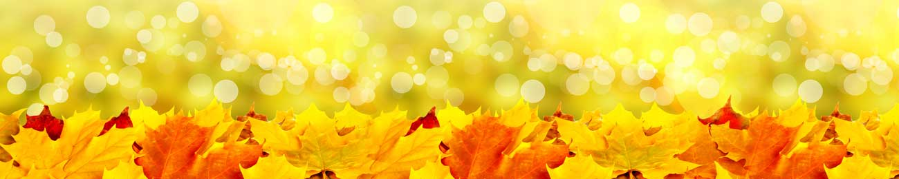 Splashbacks Glass design - Autumn yellow leaves  - 100438 Image
